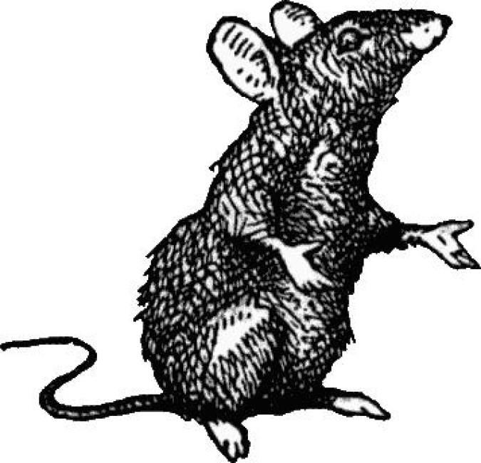 Rat's Wife